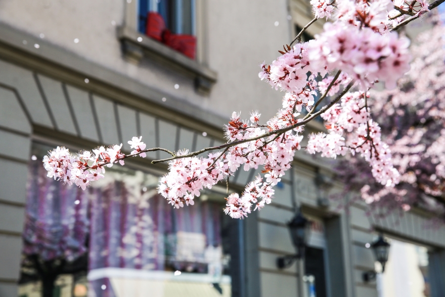 Ausflugstipps Schweiz: Die schönsten Orte im Frühling